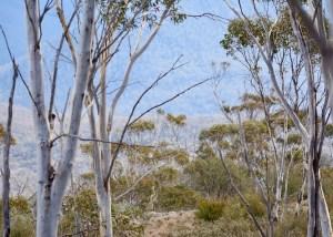 Hiking in Namadgi National Park, ACT, Australia