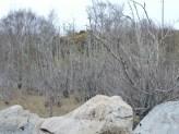 flood damaged trees