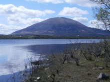 The nephin