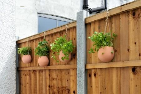 plant wall3