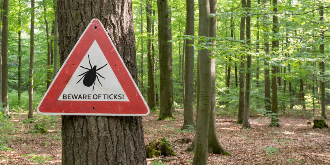 The CDC is trying to warn people about tick bites in a really gross way