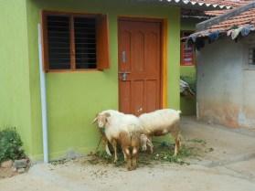 Mysore silk village