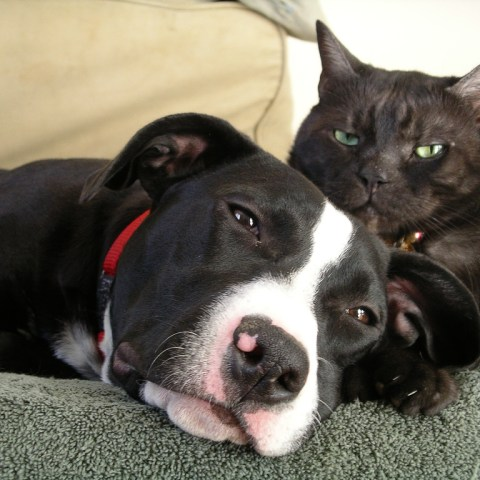 7 pet care savings tips