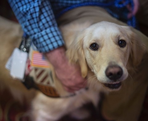 Nonprofit helps find temporary homes for pets of deployed military members
