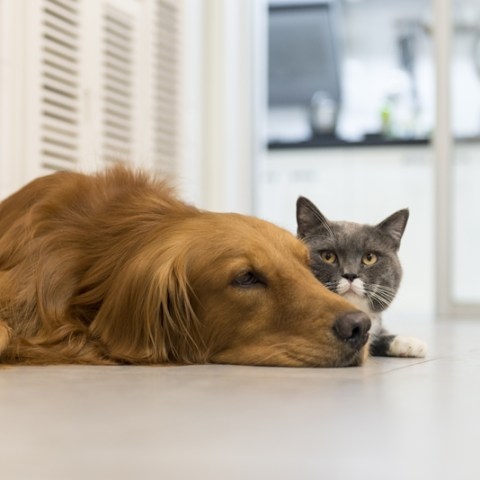 12 low-cost pet ideas for Fido or Fluffy