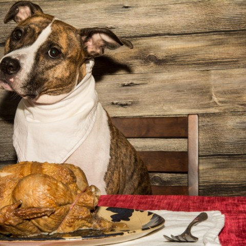 8 Thanksgiving Day foods you shouldn't feed your dog