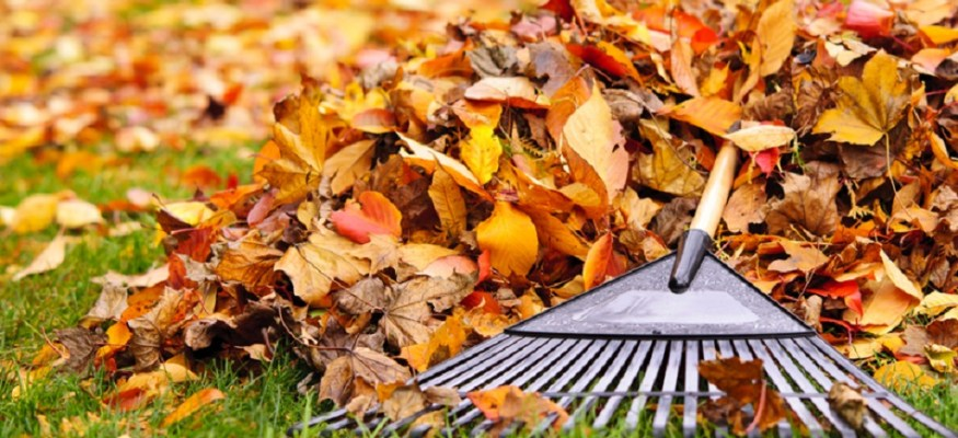 Here's the #1 reason to avoid raking leaves this fall