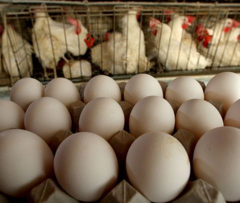 Your store-bought eggs are older than you think