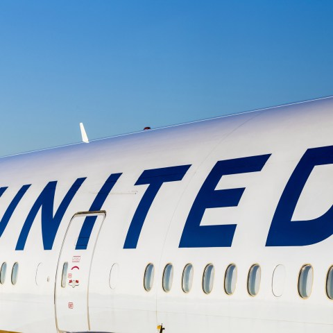 United Airlines threatened with lawsuit over death of giant rabbit