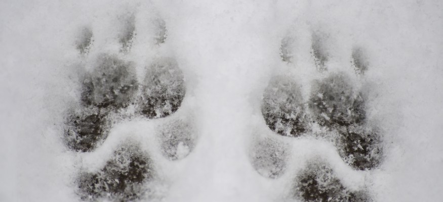 7 ways to keep your pets safe during winter weather