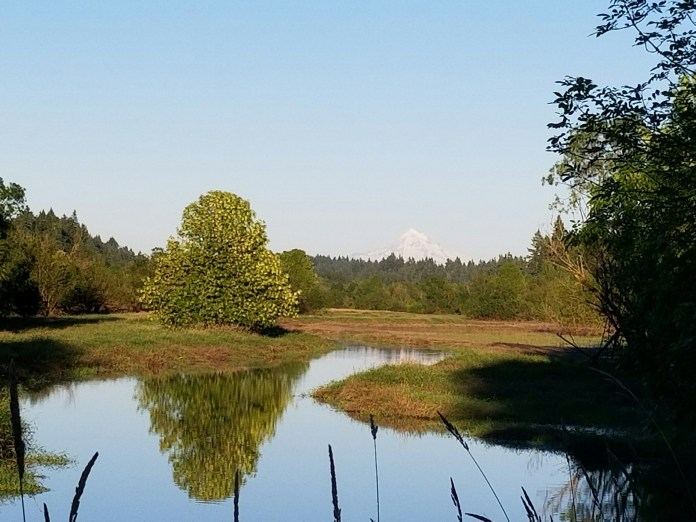 salmon creek greenway