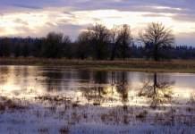 Clark County Wildlife Refuges Ridgefield Wildlife Refuge