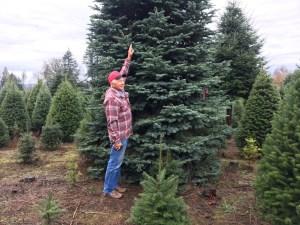The Tree Wisemans Ridgefield