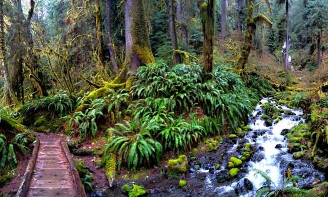 Pacific Northwest Trails