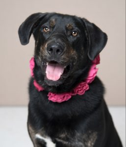 Humane Society for Southwest Washington Pet of the Week Dahlia
