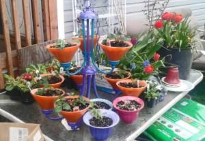 Habitat Restore DYI Planter