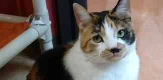 Humane Society for Southwest Washington Pet of the Week Missy