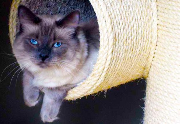 Royal Meow Cat Castle Regal Cat