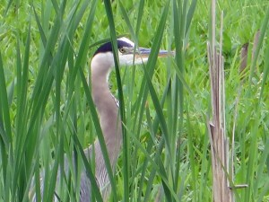 Ridgefield Lake National Wildlife Refuge