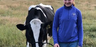 Madelyn Hartrim-Lowe 4H cow