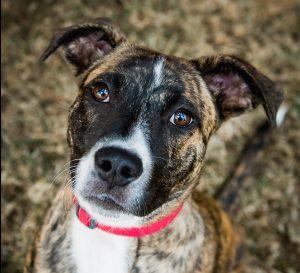 Humane Society for Southwest Washington Pet of the Week Dash