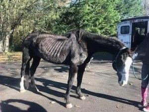 Adopt A Horse Clark County Two sox
