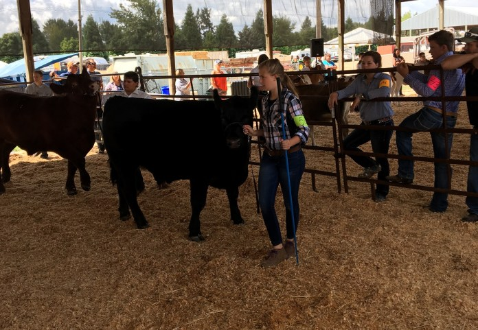 Clark County 4-H Sara Baldwin 3771