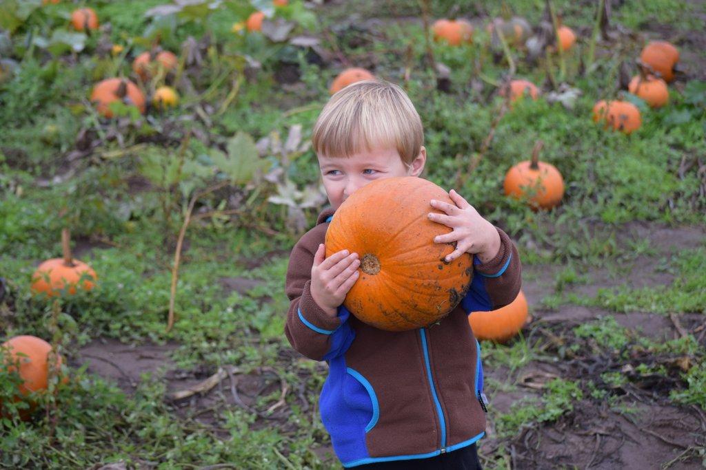 Pumpkin-patch-clark county