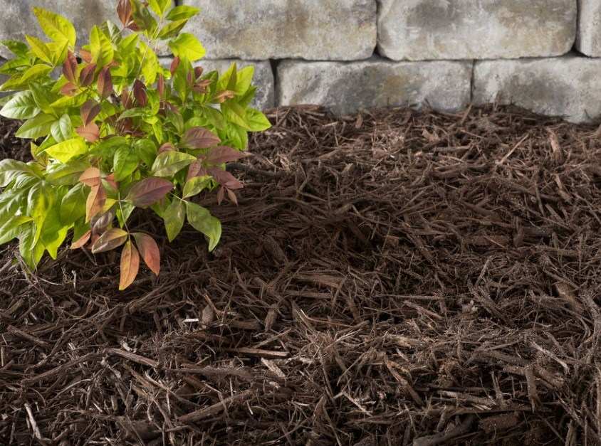 Bags of mulch for $2 at Lowe's Home Improvement