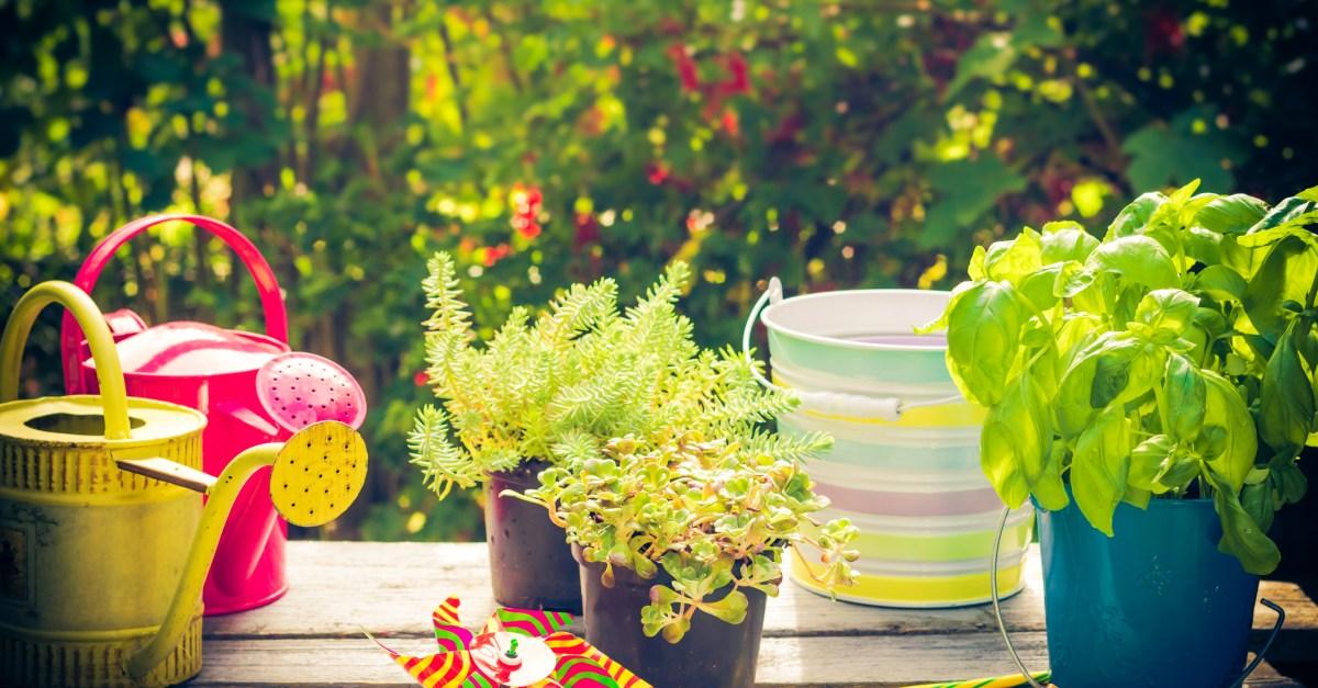 12 ways to save on your summer garden