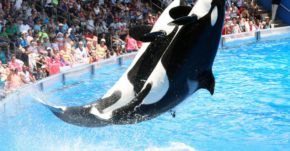 Get FREE admission to SeaWorld Orlando during Magical Dining season!