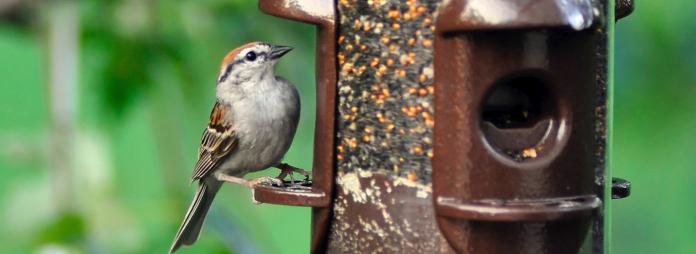 birdfoodsettlement.com