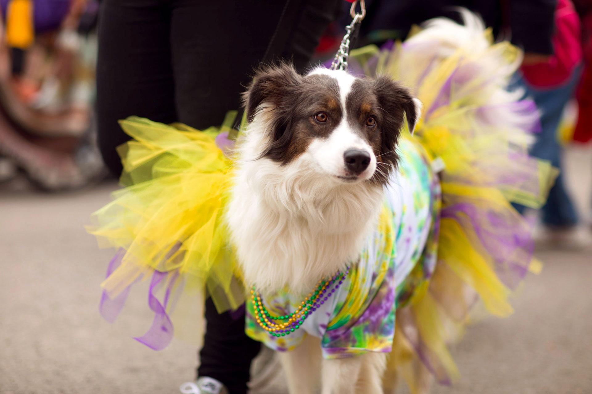 Cachorro fantasiado para o Carnaval