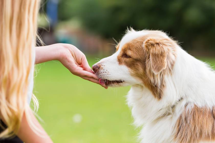 Obesity in Dogs   Dog Healthy Weight   Pet Talk   Pets at Home