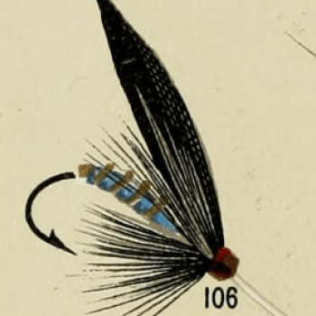 Blue Bottle Fly Trout Fly
