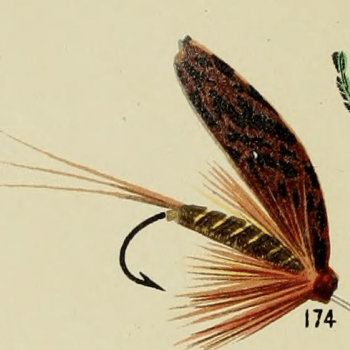 March Brown Trout Fly