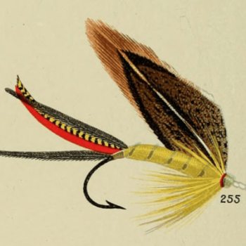 Jungle Cock Bass Fly
