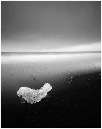 Ice-Seal-bw