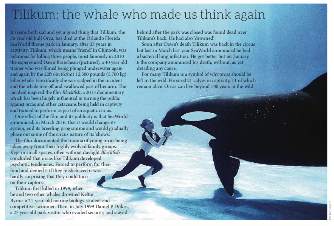 Tilikum: the whale who made us think again – Classic Sailor