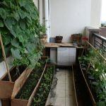 21 важный момент, если вы хотите разместить на своем балконе огород с освещением