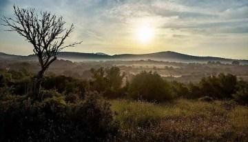 Mallorca landscape