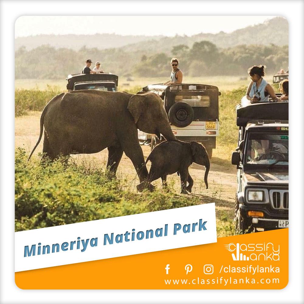 Sri Lanka Minneriya National Park Safari guide