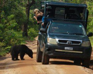 yala wild safari tour