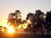 Good Morning! Photo: wallyir, from: morgueFile.com