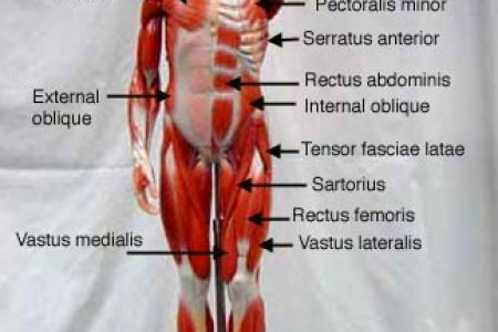 interior internal muscle anatomy » Full HD MAPS Locations - Another ...