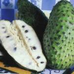 Properties cultivation of soursop