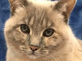 Clatsop County Animal Shelter Pet of the week baby
