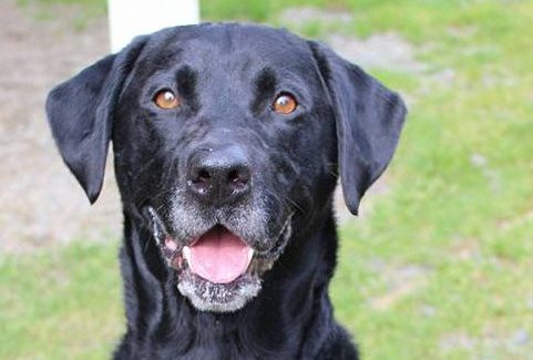 Clatsop County Animal Shelter Pet of the week Chase