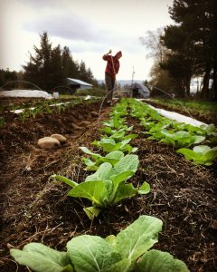 Community Supported Agriculture Clatsop County moon river farm