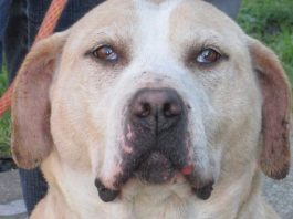 Clatsop County Animal Shelter Pet of the Week Oceana